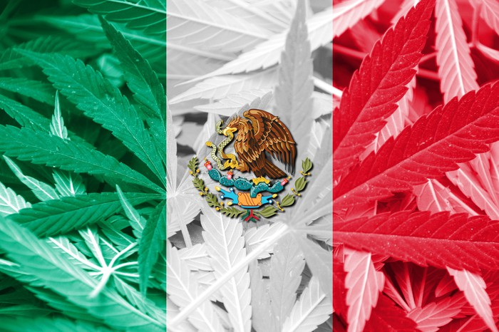 Mexico's flag superimposed over a bed of cannabis leaves.