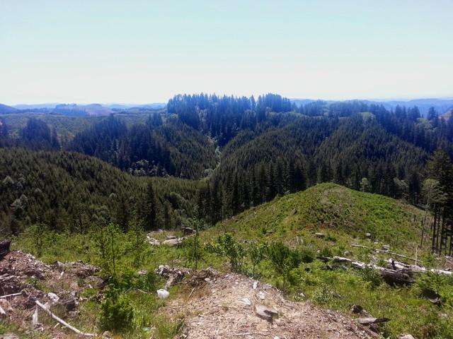 Elliott State Forest near Coos Bay, Oregon