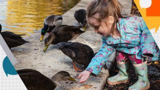 A girl feeding ducks